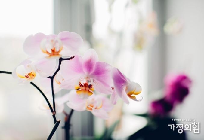 베란다 난 꽃에게 배우는 '가정의 힘'